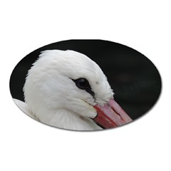 Wild Stork Bird, Close Up Oval Magnet by picsaspassion