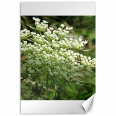 White Summer Flowers Canvas 24  X 36  by picsaspassion