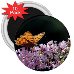 Butterfly Sitting On Flowers 3  Magnets (10 Pack)