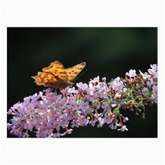 Butterfly Sitting On Flowers Collage Prints by picsaspassion