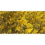 Nature, Yellow Orange Tree Photography #1 MOM 3D Greeting Cards (8x4) Back