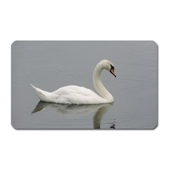 Swimming White Swan Magnet (rectangular) by picsaspassion