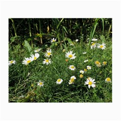Wild Daisy Summer Flowers Small Glasses Cloth
