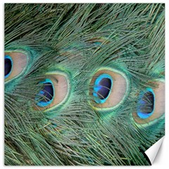 Peacock Feathers Macro Canvas 16  X 16   by GiftsbyNature