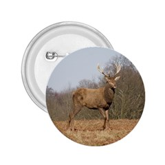 Red Deer Stag On A Hill 2 25  Buttons by GiftsbyNature