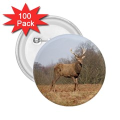 Red Deer Stag On A Hill 2 25  Buttons (100 Pack)  by GiftsbyNature