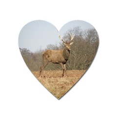 Red Deer Stag On A Hill Heart Magnet by GiftsbyNature