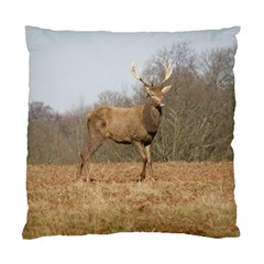 Red Deer Stag On A Hill Standard Cushion Case (one Side) by GiftsbyNature