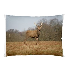 Red Deer Stag On A Hill Pillow Case by GiftsbyNature