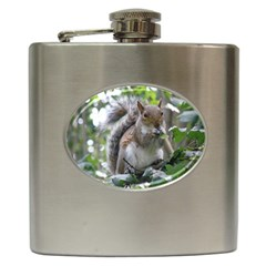 Gray Squirrel Eating Sycamore Seed Hip Flask (6 Oz) by GiftsbyNature