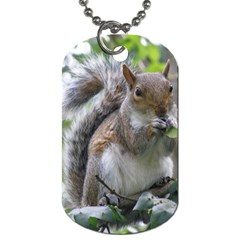 Gray Squirrel Eating Sycamore Seed Dog Tag (two Sides) by GiftsbyNature