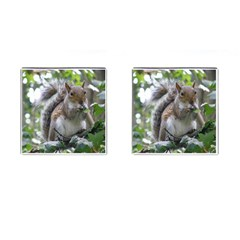 Gray Squirrel Eating Sycamore Seed Cufflinks (square) by GiftsbyNature
