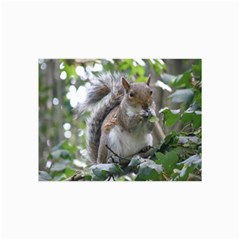Gray Squirrel Eating Sycamore Seed Collage Prints by GiftsbyNature