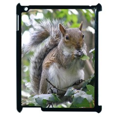 Gray Squirrel Eating Sycamore Seed Apple Ipad 2 Case (black) by GiftsbyNature