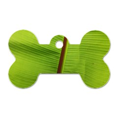 Ensete Leaf Dog Tag Bone (one Side)