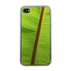 Ensete Leaf Apple Iphone 4 Case (clear) by picsaspassion