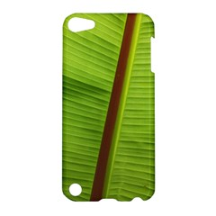 Ensete Leaf Apple Ipod Touch 5 Hardshell Case by picsaspassion
