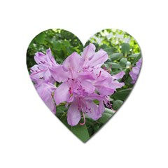 Purple Rhododendron Flower Heart Magnet by picsaspassion