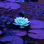 Lotus Flower Magical Colors Purple Blue Turquoise BELIEVE 3D Greeting Card (8x4) Inside