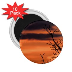 Tree Branches And Sunset 2 25  Magnets (10 Pack)  by picsaspassion