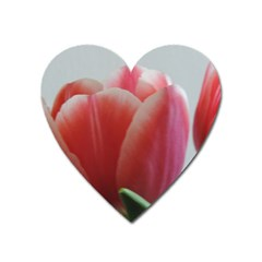 Red   White Tulip Flower Heart Magnet by picsaspassion