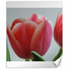 Red   White Tulip Flower Canvas 8  X 10