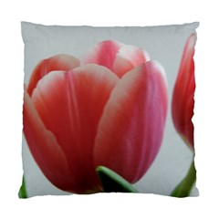 Red   White Tulip Flower Standard Cushion Case (two Sides)