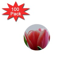 Red Tulips 1  Mini Buttons (100 Pack)  by picsaspassion