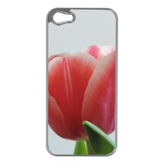 Red Tulips Apple Iphone 5 Case (silver) by picsaspassion