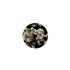 Blooming Japanese Cherry Flowers 1  Mini Buttons by picsaspassion