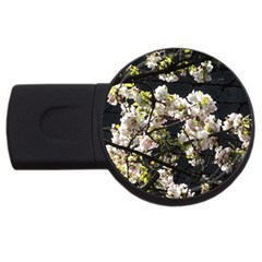 Blooming Japanese Cherry Flowers Usb Flash Drive Round (2 Gb)