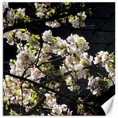 Blooming Japanese Cherry Flowers Canvas 16  X 16   by picsaspassion