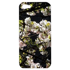 Blooming Japanese Cherry Flowers Apple Iphone 5 Hardshell Case by picsaspassion