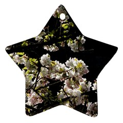 Japanese Cherry Flower Star Ornament (two Sides)  by picsaspassion