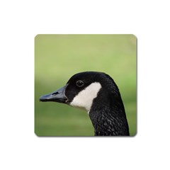 Goose Bird In Nature Square Magnet by picsaspassion