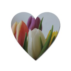 Colored By Tulips Heart Magnet by picsaspassion
