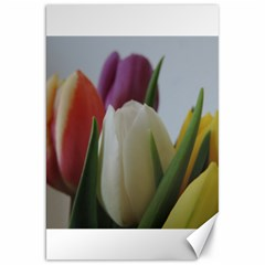 Colored By Tulips Canvas 20  X 30   by picsaspassion