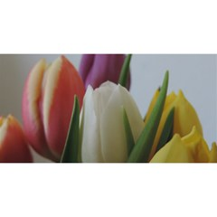 Colored By Tulips You Are Invited 3d Greeting Card (8x4) by picsaspassion