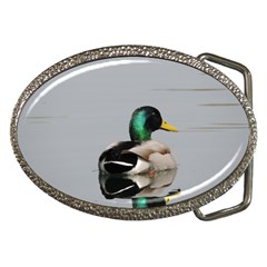 Swimming Duck Belt Buckles by picsaspassion