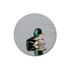 Swimming Duck Magnet 3  (round) by picsaspassion