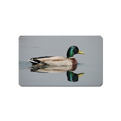 Wild Duck Swimming In Lake Magnet (name Card)