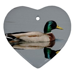 Wild Duck Swimming In Lake Heart Ornament (2 Sides) by picsaspassion