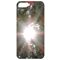 Sun Rays Through White Cherry Blossoms Apple Iphone 5 Classic Hardshell Case by picsaspassion
