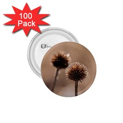 2  Verwelkte Kugeldistel 1 75  Buttons (100 Pack)  by wsfcow