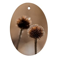 Withered Globe Thistle In Autumn Macro Ornament (oval)  by wsfcow