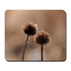 Withered Globe Thistle In Autumn Macro Large Mousepads by wsfcow
