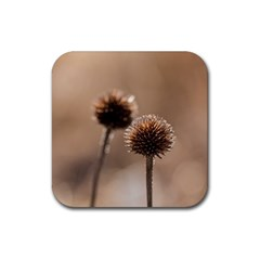 Withered Globe Thistle In Autumn Macro Rubber Coaster (square)  by wsfcow