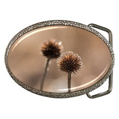 Withered Globe Thistle In Autumn Macro Belt Buckles by wsfcow