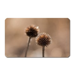 Withered Globe Thistle In Autumn Macro Magnet (rectangular) by wsfcow