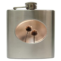 Withered Globe Thistle In Autumn Macro Hip Flask (6 Oz) by wsfcow